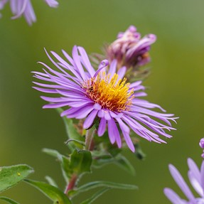 New to me: Sigma 150mm F2.8 Macro-4/3 mount-encouraging results
