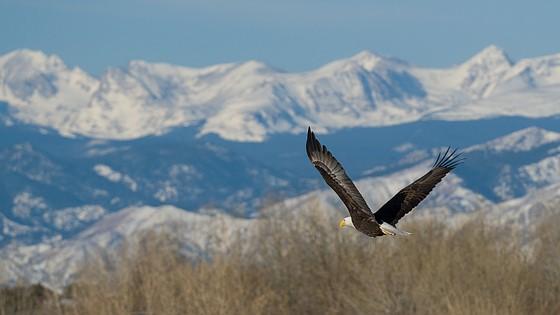 Colorado Front Range Wildlife Sony Alpha Nex E Mount