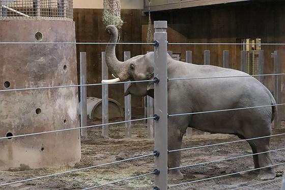 Elephant at ISO12800: Canon Rebel (EOS 200D-800D) Talk Forum