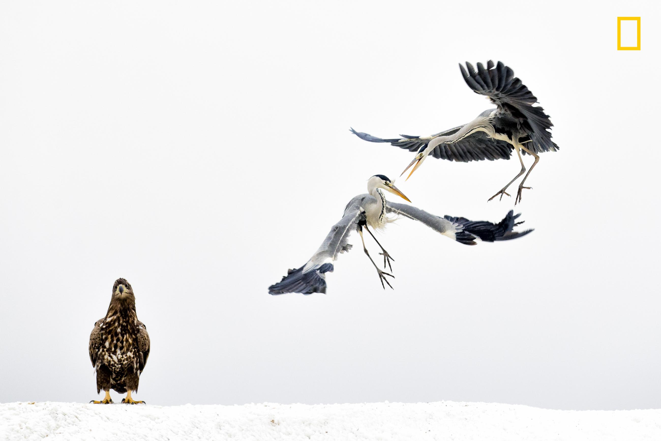 NGNP-3rdPlace-Wildlife.jpeg