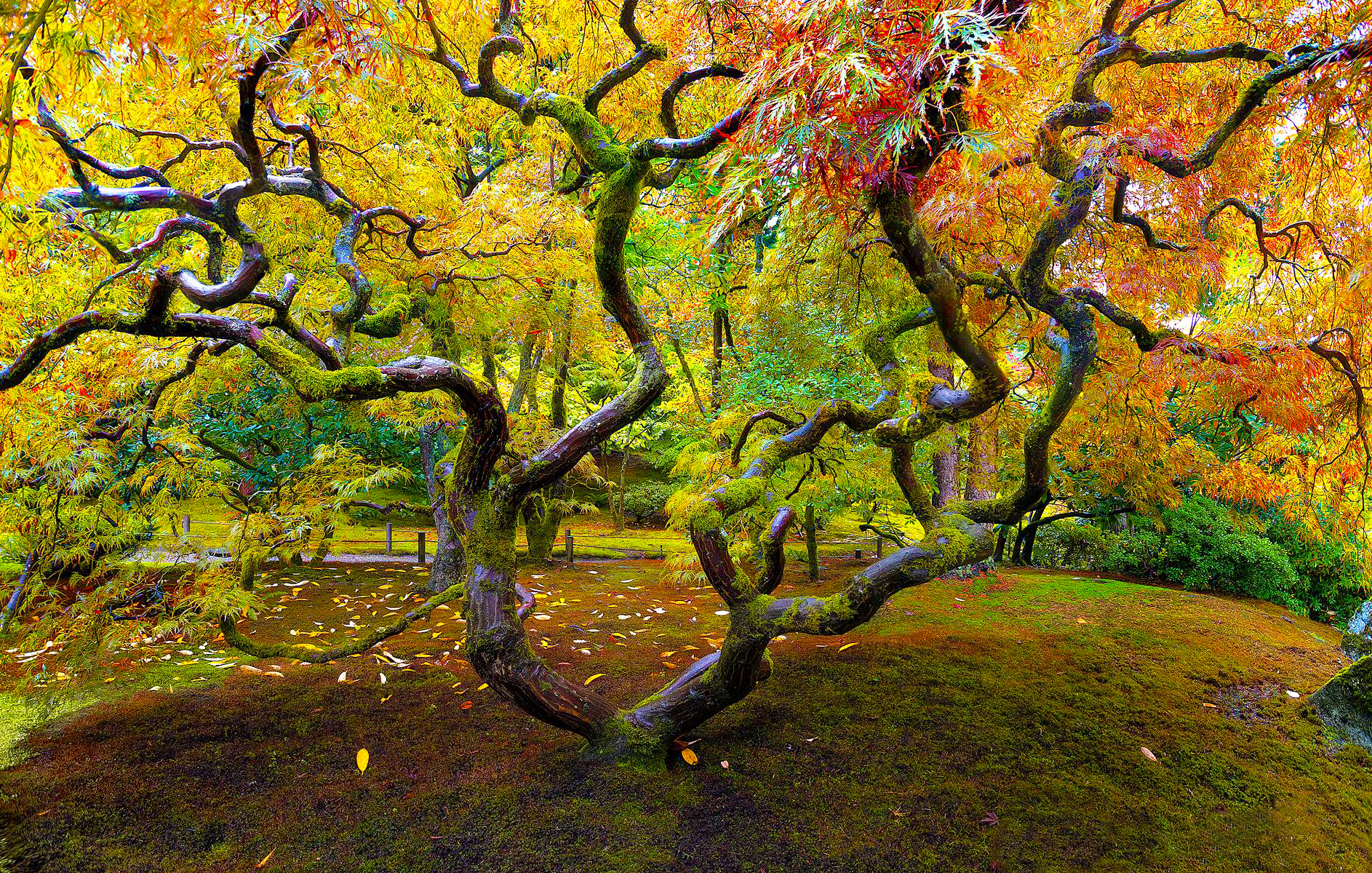6 tips for shooting fall color: Digital Photography Review