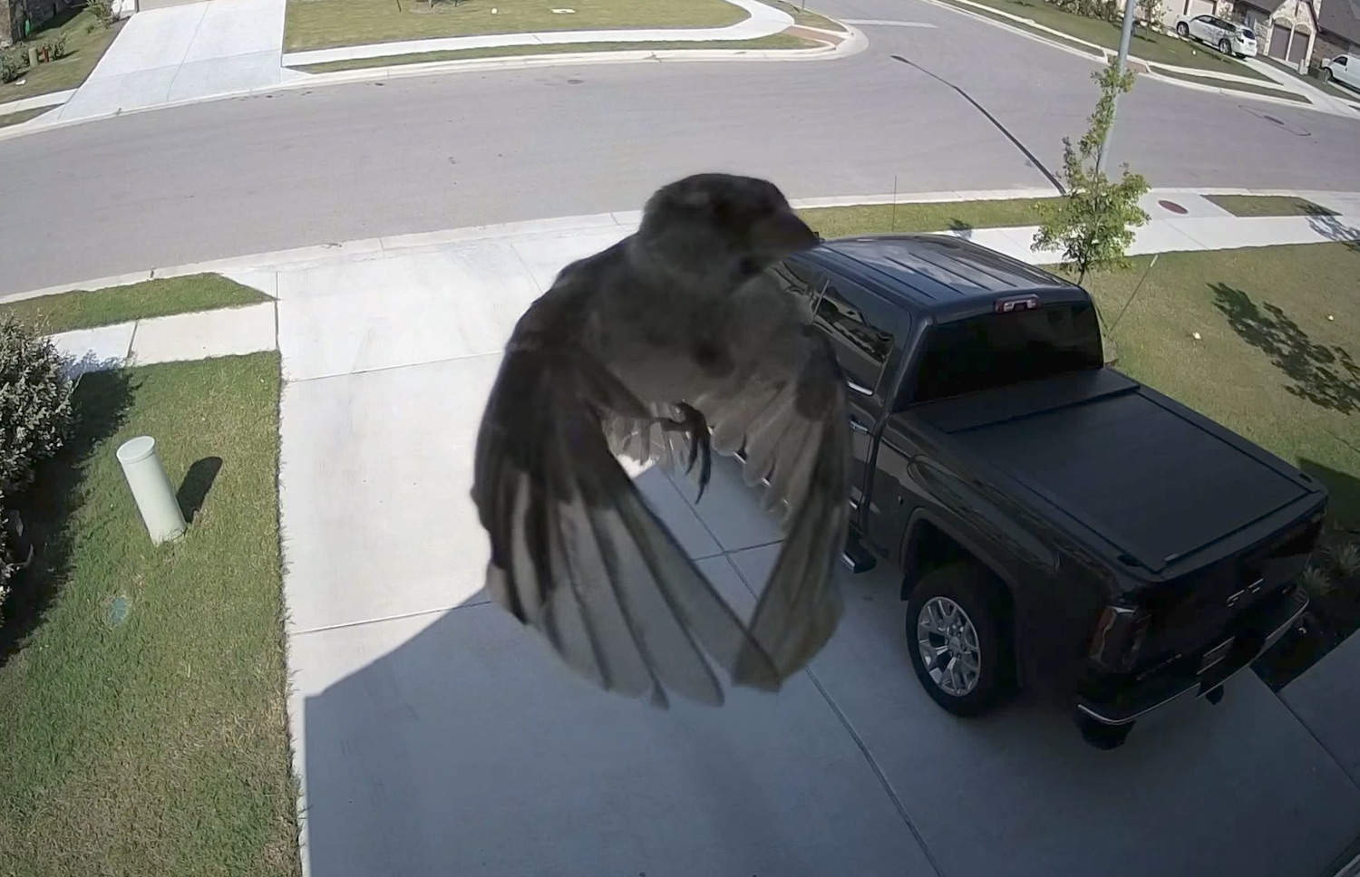 This is what happens when your camera's frame rate matches a bird's