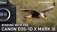 Birding with the Canon EOS-1D X Mark III