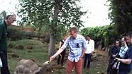 Autographer stop motion movie: Feeding giant tortoises at London Zoo