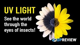 Ultraviolet Light Explained: See the world through the eyes of insects