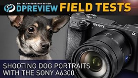 Shooting Dog Portraits with the Sony a6300